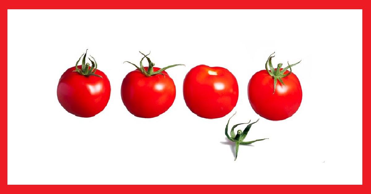 pomodori blog